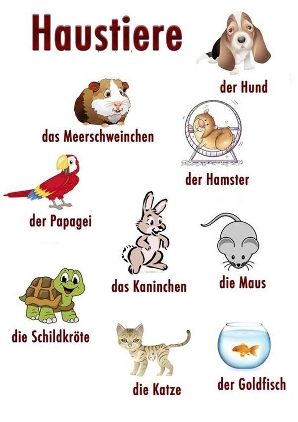 Học Từ Vựng Tiếng Đức Bằng Hình Ảnh
